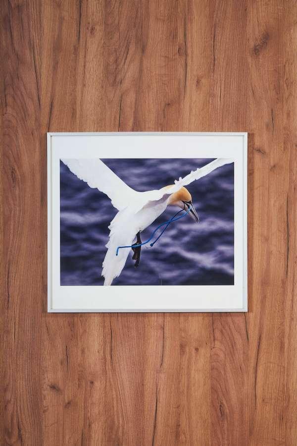Su Üstünde İp Taşıyan Kuş Orta Boy Tablo
