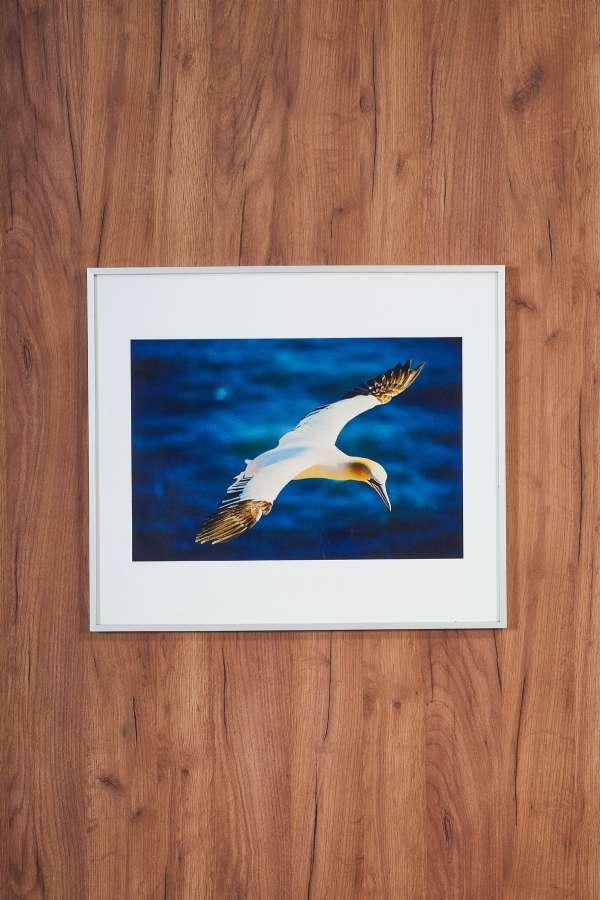 Su Üstünde Uçan Kuş Orta Boy Tablo